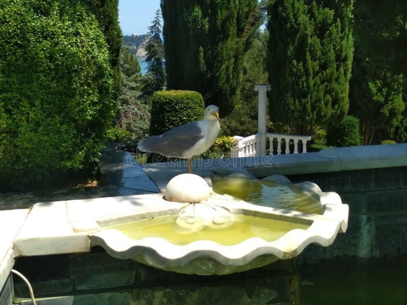 Parco di Aivazovsky in Crimea fotografie stock