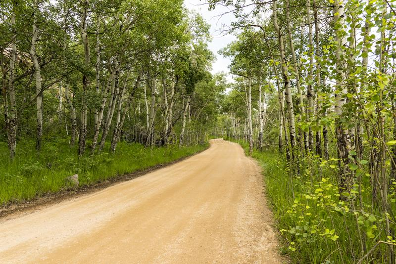 Parco di Aspen Way Rocky Mountain National fotografie stock