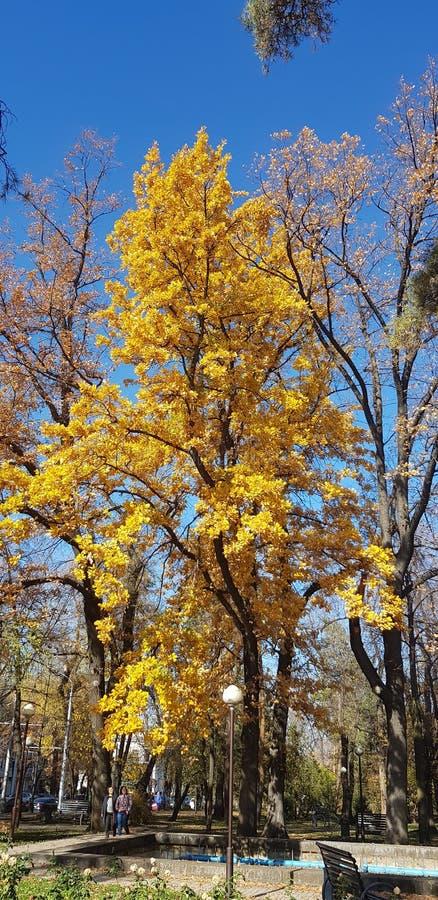 Parco di autunno Alberi e foglie autunnali nei raggi del sole immagine stock