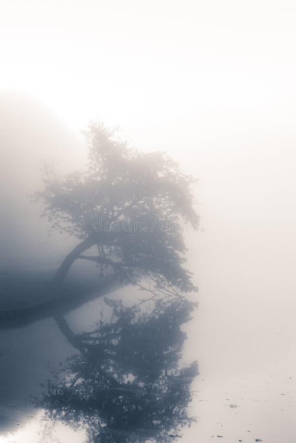 Parco di autunno su una mattina nebbiosa. fotografia stock