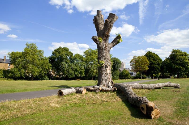 Parco di Brockwell in Brixton, Londra immagini stock libere da diritti