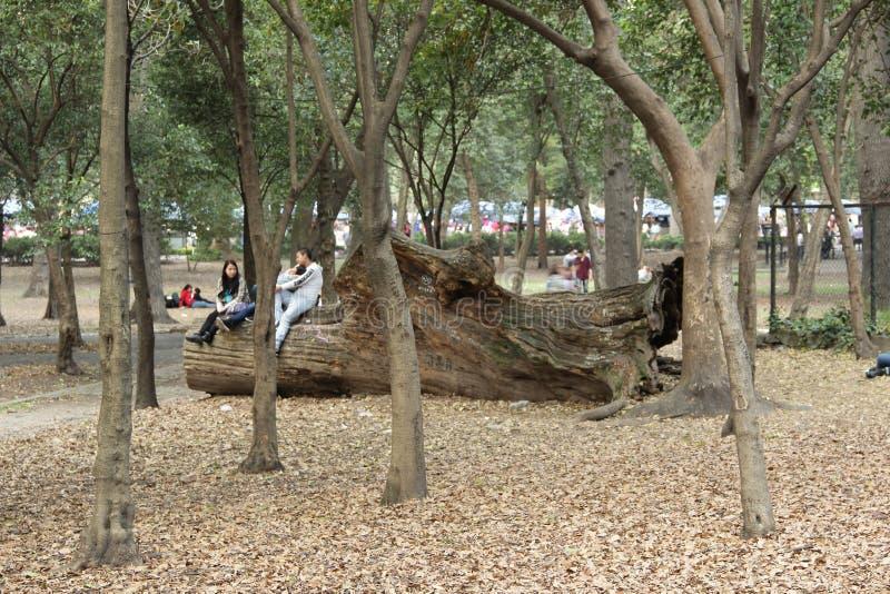 Parco di Chapultepec fotografia stock