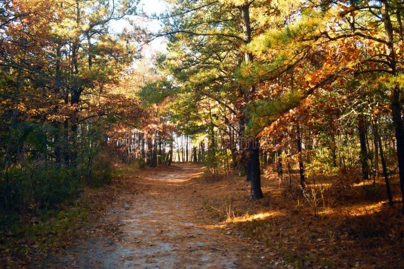 Parco di Cheesequake, fuori dal percorso battuto -11 fotografia stock