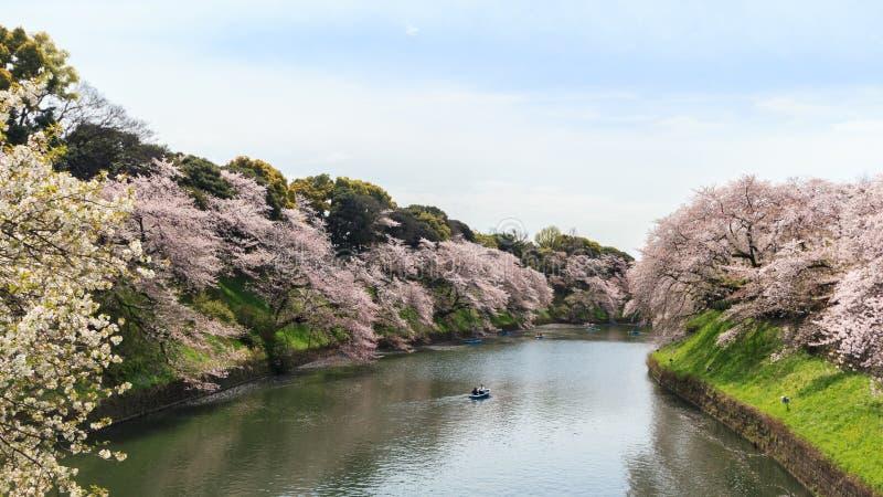 Parco di Chidorigafuchi durante la stagione primaverile immagine stock libera da diritti