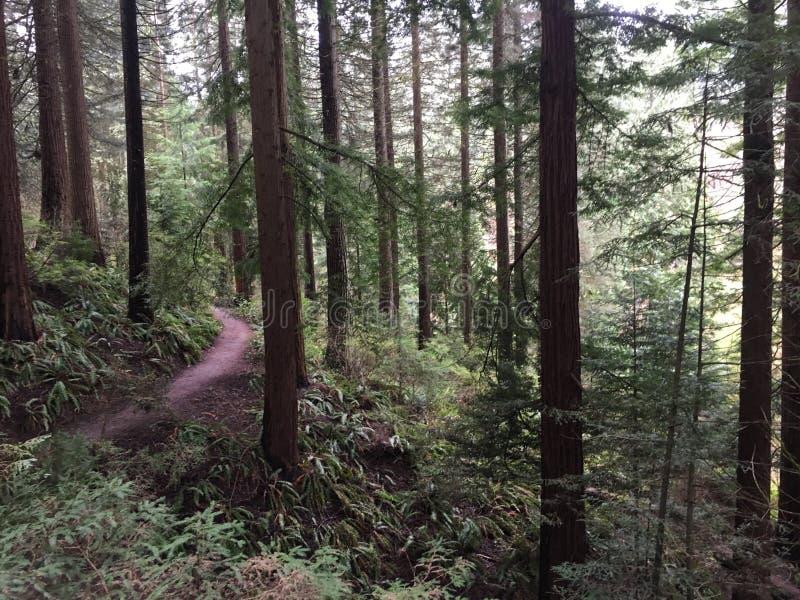Parco di Forrest fotografie stock libere da diritti