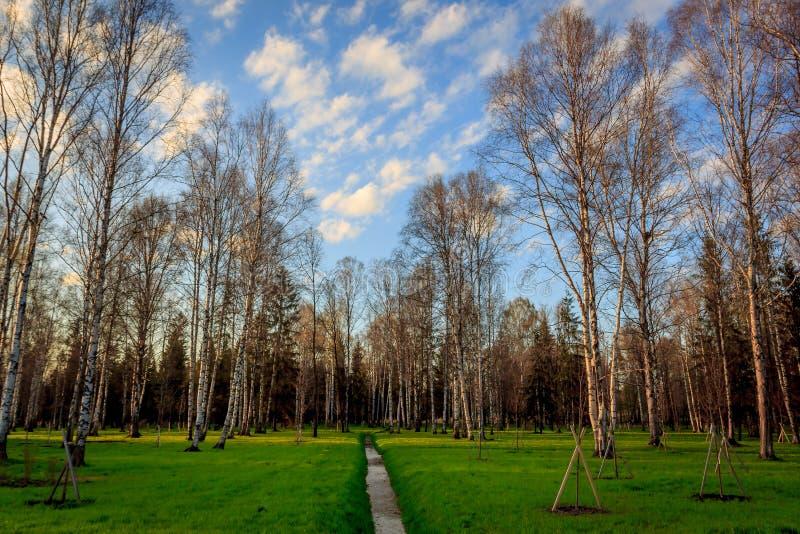 Parco di Gatcina della primavera fotografie stock libere da diritti