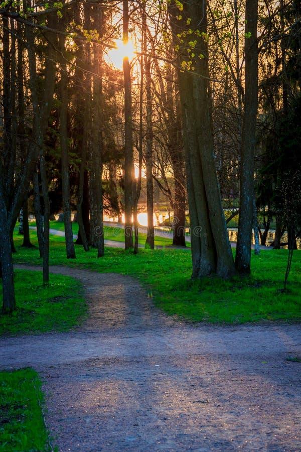 Parco di Gatcina della primavera fotografia stock