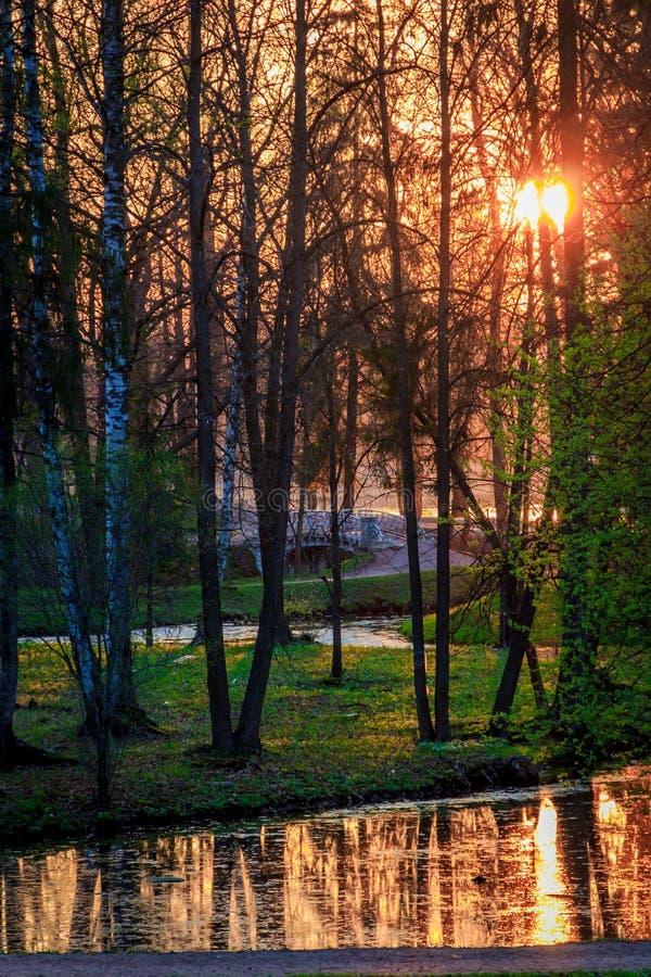 Parco di Gatcina della primavera fotografia stock libera da diritti