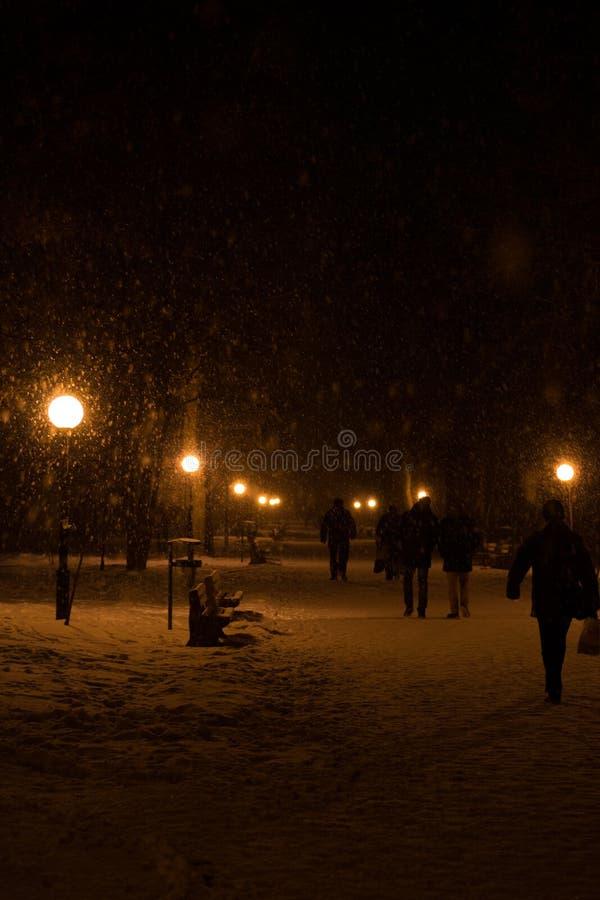 Parco di inverno nella sera immagini stock libere da diritti