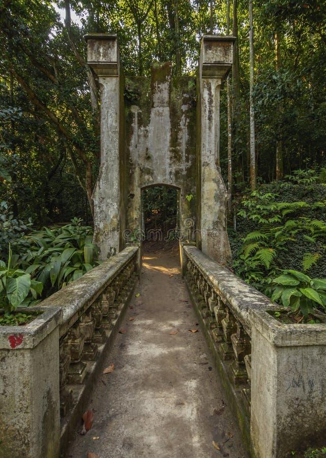 Parco di Lage in Rio de Janeiro fotografia stock libera da diritti