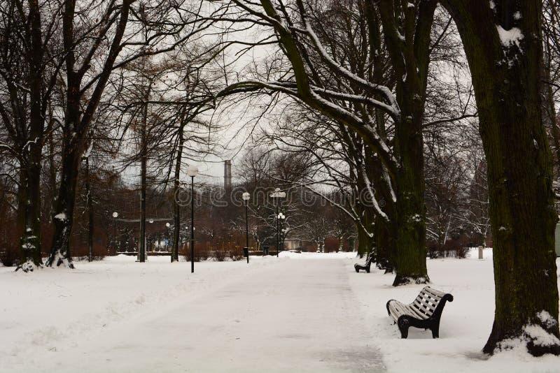 Parco di Rannamagi all'inverno tallinn L'Estonia fotografie stock