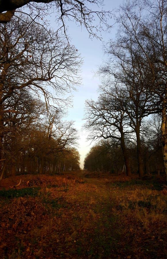 Parco di Richmond, sightline protetto nell'inverno fotografia stock libera da diritti
