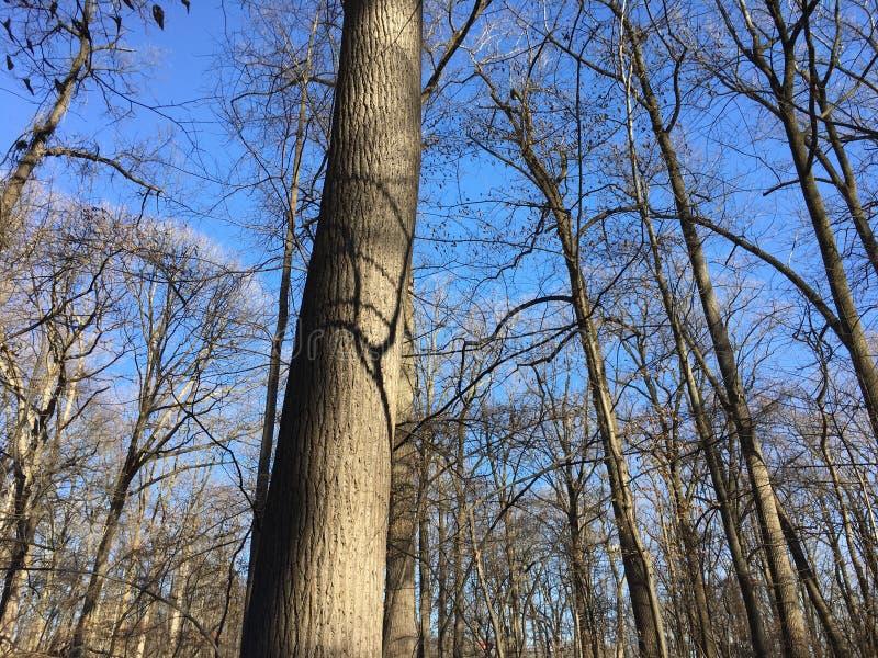 Parco di Rock Creek nell'inverno immagini stock