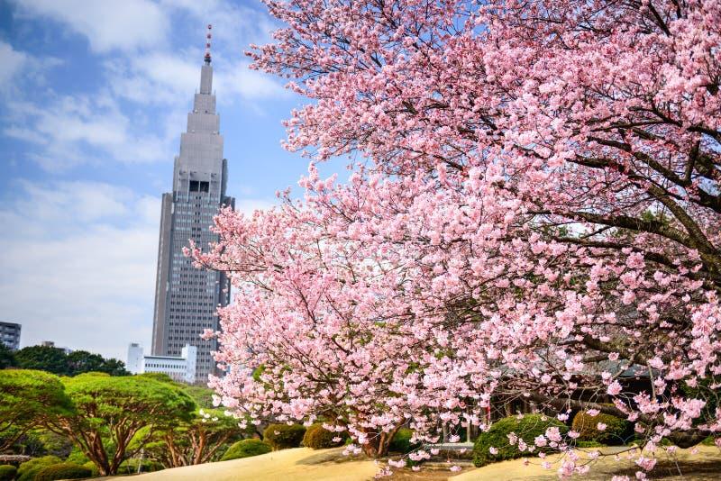 Parco di Shinjuku Gyoen nella primavera fotografie stock