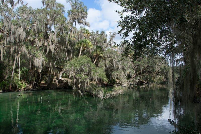 Parco di stato blu della primavera, Florida, U.S.A. immagine stock