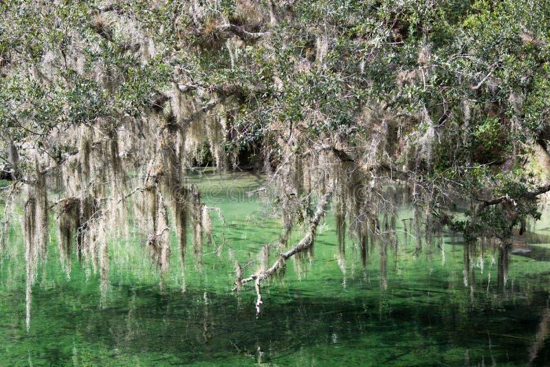 Parco di stato blu della primavera, Florida, U.S.A. fotografia stock libera da diritti