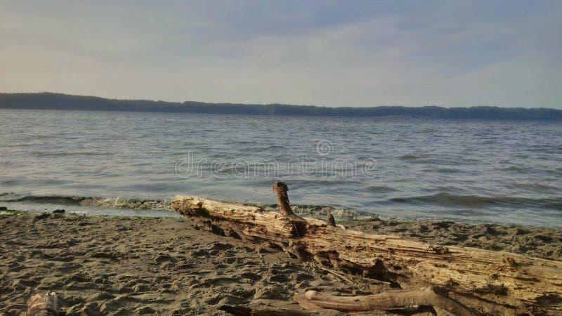 Parco di stato del punto del un poco di Seattle Puget Sound immagine stock