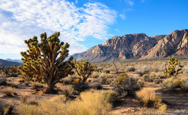 Parco di stato del ranch della montagna della primavera fotografie stock