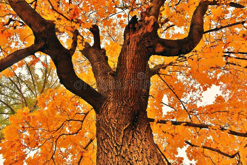 Parco di Tsaritsyno contenuto foto a colori della foresta di autunno a Mosca immagini stock libere da diritti