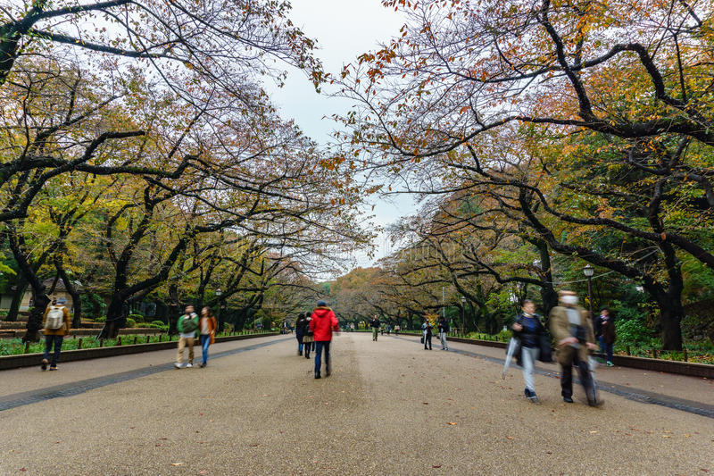 Parco di Ueno a Tokyo, Giappone immagine stock libera da diritti