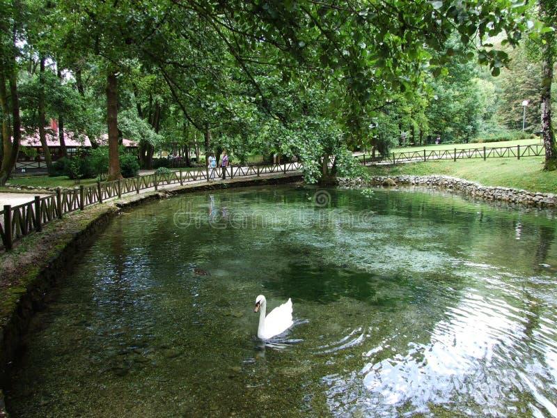 Parco e fonte di fiume di Bosna fotografia stock libera da diritti
