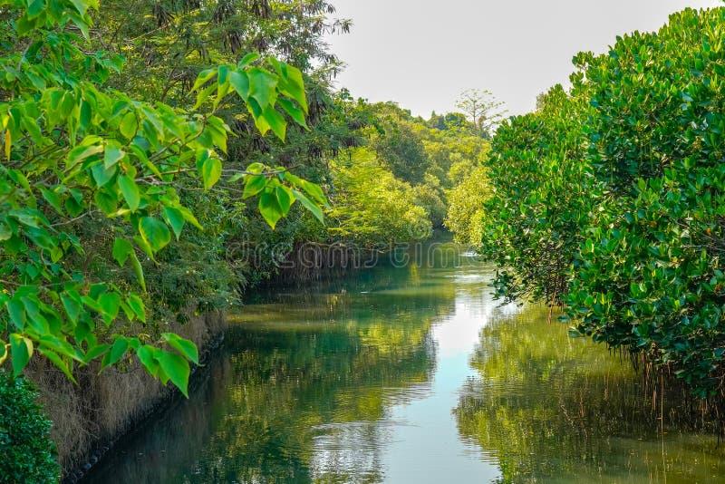 Parco ecologico del tunnel di verde di Sicao Tainan, Taiwan immagine stock
