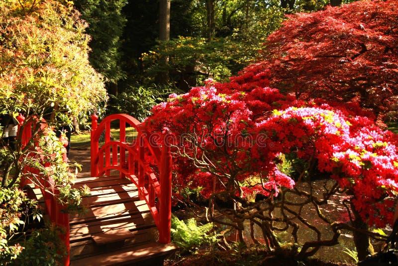 Parco giapponese nel Haguee fotografia stock