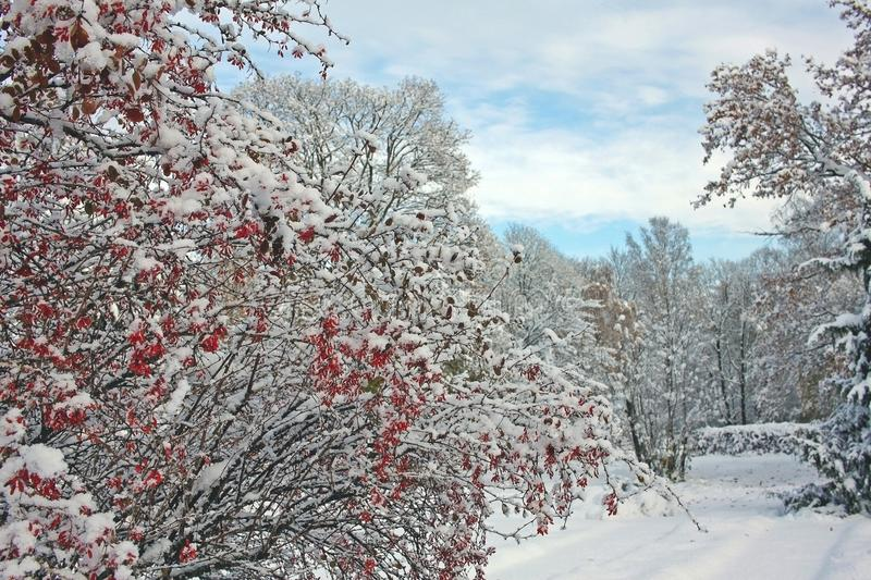 Parco innevato nel giorno soleggiato di novembre fotografia stock libera da diritti