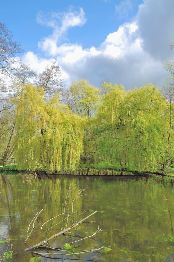 Parco naturale di Schwalm-Nette, Nettetal, Germania fotografia stock libera da diritti