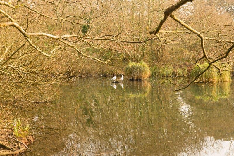 Parco nazionale Cornovaglia Inghilterra Regno Unito di Tehidy fotografia stock libera da diritti