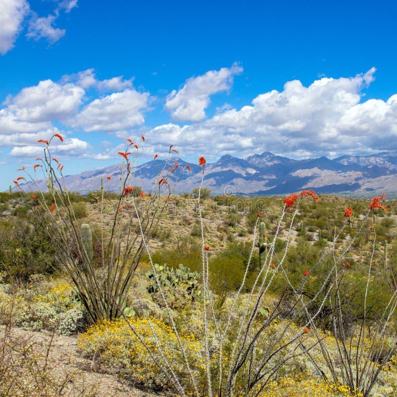 Parco nazionale del saguaro immagini stock