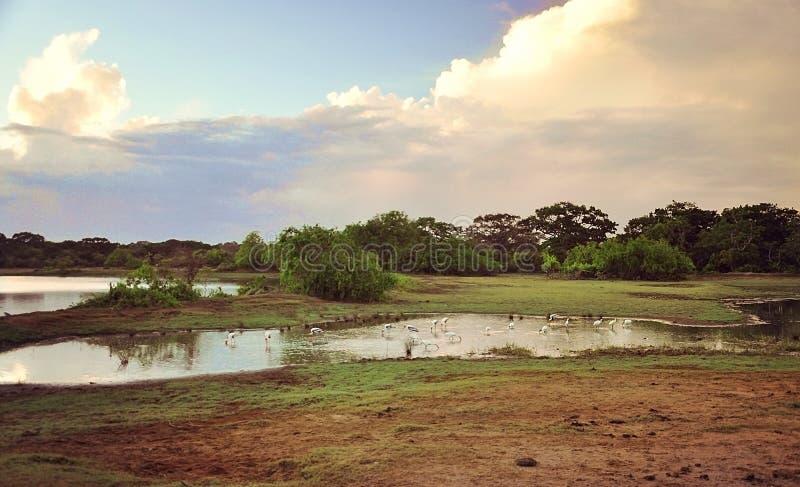 parco nazionale dello Sri Lanka Yala del ¡ del  del °å di Œå del ‡ del æ-¯é… fotografia stock libera da diritti