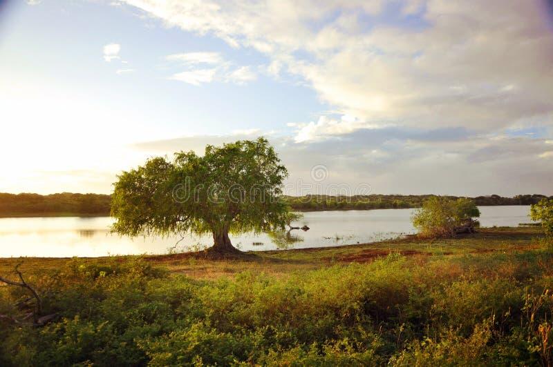 parco nazionale dello Sri Lanka Yala del ¡ del  del °å di Œå del ‡ del æ-¯é… fotografia stock