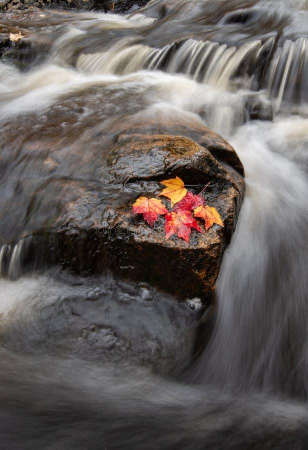 Parco nazionale di acadia in Maine immagine stock