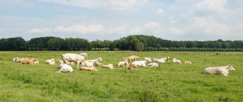 Parco nazionale di Biesbosch nei Paesi Bassi fotografia stock