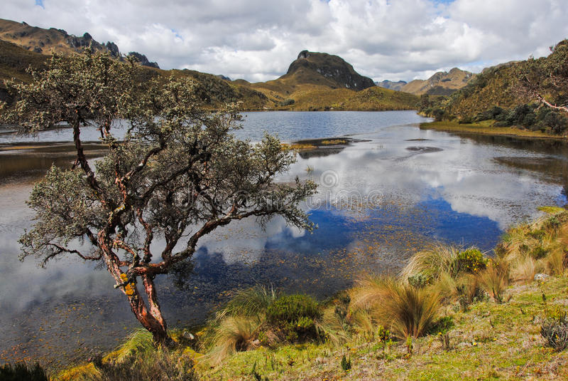 Parco nazionale di Cajas fotografie stock