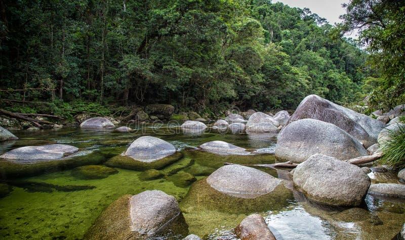 Parco nazionale di Daintree, Australia immagine stock