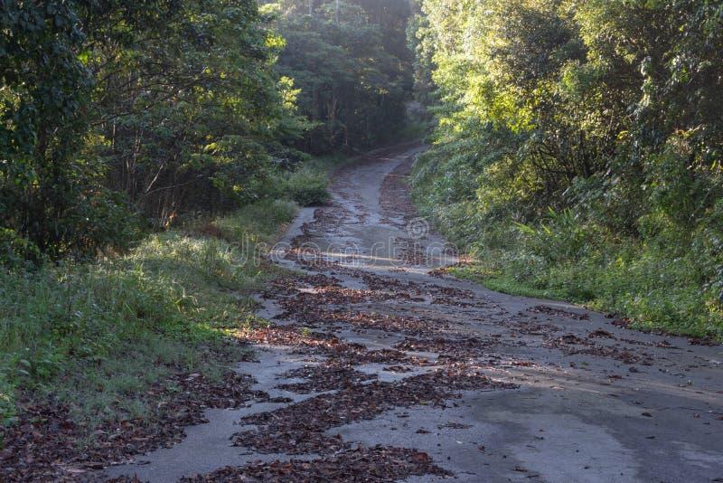 Parco nazionale di scoperta nel Vietnam, facendo un'escursione, scalare, camminante con gli amici nella parte 5 dell'abetaia immagine stock