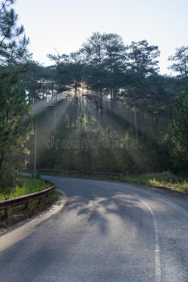 Parco nazionale di scoperta nel Vietnam, facendo un'escursione, scalare, camminante con gli amici nella parte 2 dell'abetaia immagini stock libere da diritti