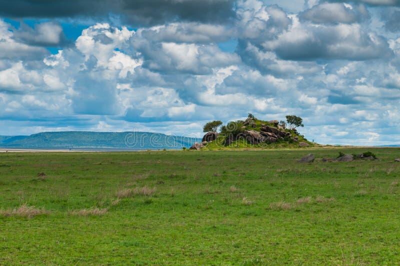 Parco nazionale di Serengeti, Tanzania, Africa fotografia stock libera da diritti