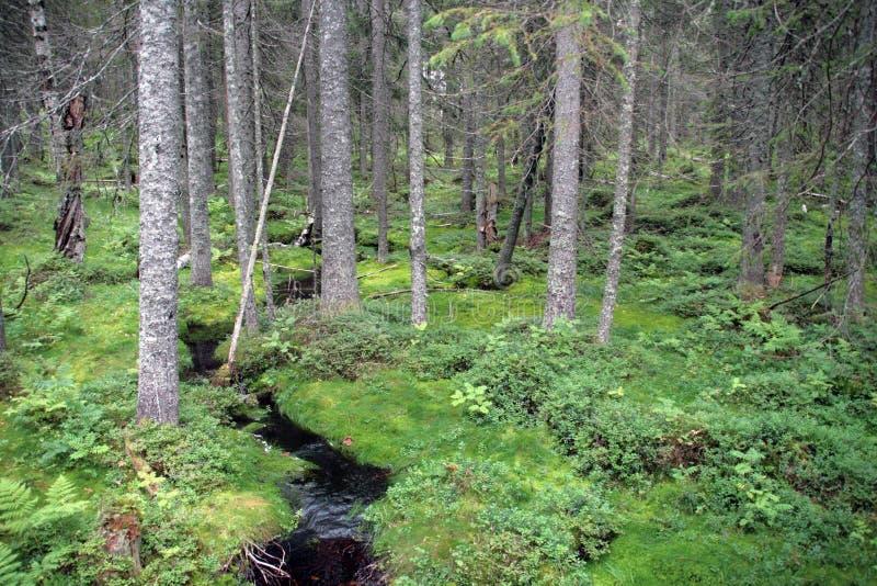 Parco nazionale di Skuleskogen fotografie stock