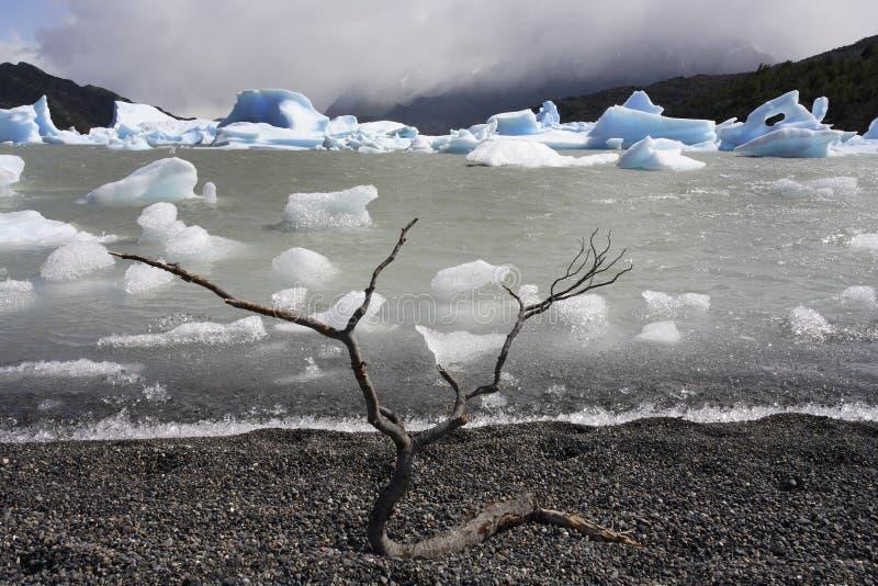 Parco nazionale di Torres del Paine - Patagonia - il Cile immagine stock