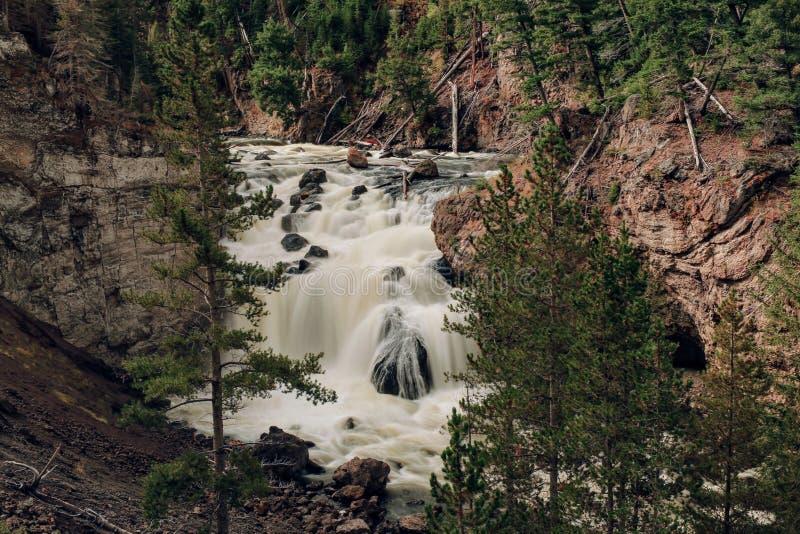 Parco nazionale di Yellowstone - 1 fotografia stock