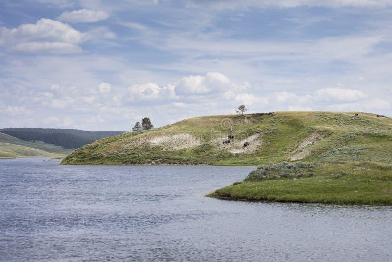 Parco nazionale di Yellowstone immagini stock