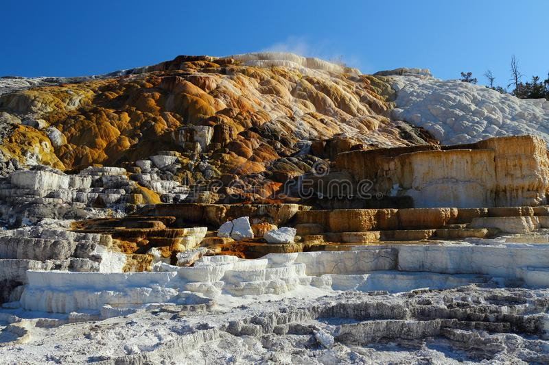 Parco nazionale di Yellowstone, Wyoming, USA, la sera luce su Minerva Terraces a Mammoth Hot Springs fotografia stock