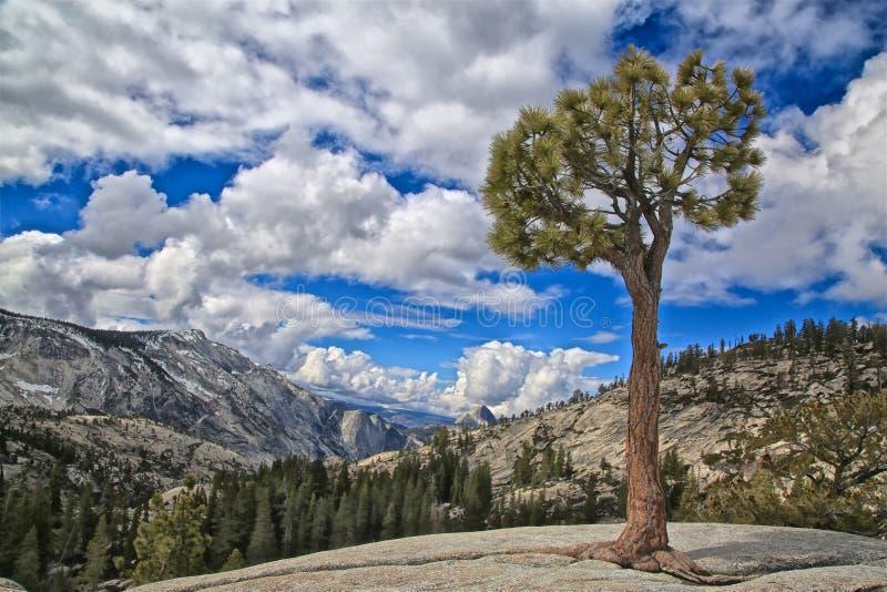 Parco nazionale di Yosemite California del punto di Olmsted fotografie stock