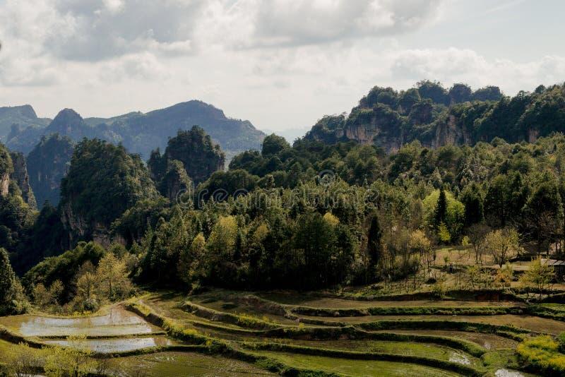 Parco nazionale di Zhangjiajie fotografia stock