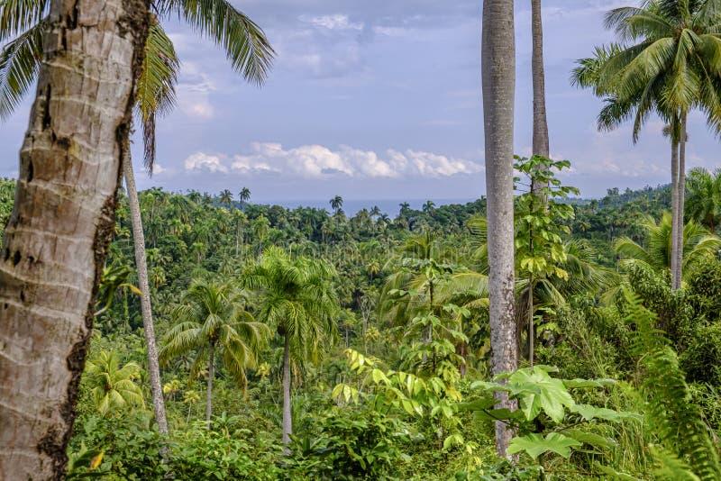 Parco nazionale Humboldt a Cuba immagini stock libere da diritti