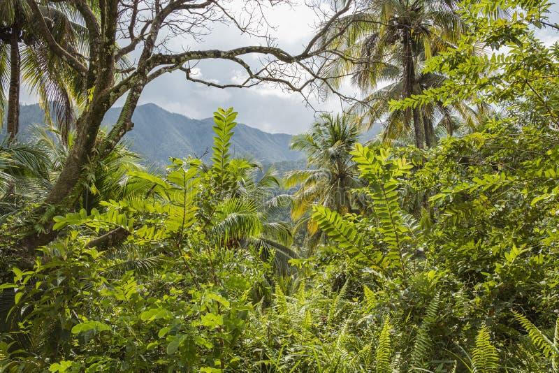 Parco nazionale Humboldt a Cuba fotografie stock