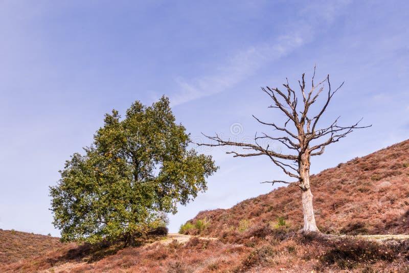 Parco nazionale Posbank Veluwe Paesi Bassi fotografie stock